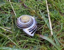 Ireland Tour Pics Spiral snail at Horn Head